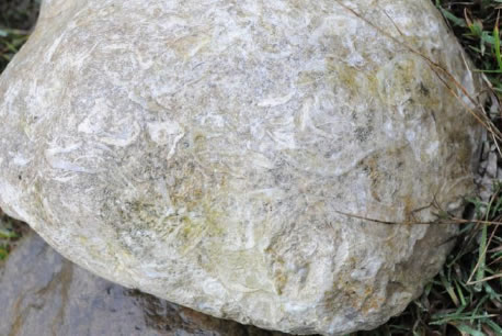 Limestone boulder packed with fossil brachiopod shells.