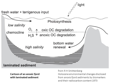 Schematic by Smittenberg 10 representing a fjord with anoxia at the sediment-water interface. The interface between high and low density is also called the pycnocline