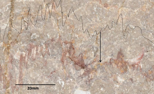 Stylolite in Carboniferous Limestone (end of arrow). Its form has been traced and reproduced in the black line drawn parallel to the stylolite  Clitheroe