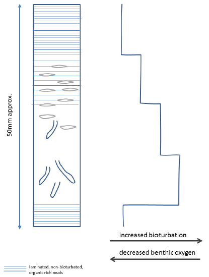 Diagram of the sedimentary record of one 'cycle' from anoxic through oxic and back to anoxic conditions. For further information about anoxic events see Leeder 11
