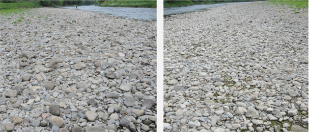 Two pictures of the shingle bank below the suspension bridge, one taken facing upstream, right, and the other downstream, left. The flatter pebbles are inclined as in Figure 9a above so you see the surface of flat pebbles looking downstream and their edges looking upstream.